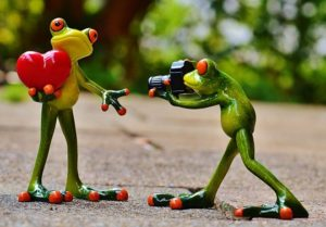 frogs-903159_960_720